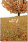 Solitude Stand Alone Tree Wrapped Canvas Giclee Print Wall Art