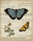 Specimen of Natural Beauty Butterflies I Wrapped Canvas Print