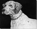 Spotted Dog Wrapped Canvas Giclee Print Wall Art