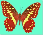 Spotted Yellow Butterfly Study Wrapped Canvas Giclee Print