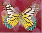 Spring Colored Butterfly Study Wrapped Canvas Giclee Print
