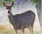 Spring Doe Wrapped Canvas Giclee Print Wall Art