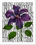 Spring Star Flower Wrapped Canvas Giclee Print Wall Art