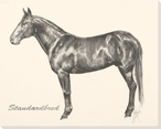 Standardbred Horse Wrapped Canvas Giclee Print Wall Art