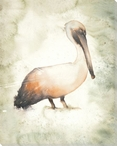 Standing Pelican Bird Wrapped Canvas Giclee Print Wall Art