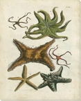 Starfish Illustration Wrapped Canvas Giclee Print Wall Art