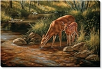Summer Shadows Whitetail Doe and Fawn Wrapped Canvas Giclee Print
