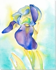 Tabletop Iris Flower Wrapped Canvas Giclee Print Wall Art