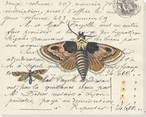 Taupe Moth Wrapped Canvas Giclee Print Wall Art