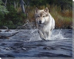 The Crossing Wild Wolf Wrapped Canvas Giclee Print Wall Art