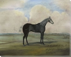 The Kicker a Steel Grey Racehorse Wrapped Canvas Giclee Print