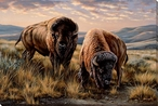 The Landlords Bison Wrapped Canvas Giclee Print Wall Art
