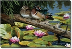 The Lily Pond Wood Ducks Wrapped Canvas Giclee Print Wall Art
