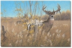 The Old Warrior Whitetail Deer Wrapped Canvas Giclee Print Wall Art