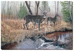 The Survivor Whitetail Deer Wrapped Canvas Giclee Print Wall Art