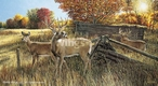 The Waiting Game Whitetail Deer Canvas Giclee Art Print Wall Art