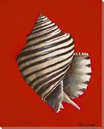 Thorned Latirus Shell Wrapped Canvas Giclee Print Wall Art