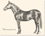 Thoroughbred Horse Wrapped Canvas Giclee Print Wall Art