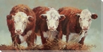 Three of a Kind Cows Wrapped Canvas Giclee Print Wall Art