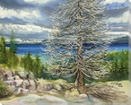 Tree at Lake Tahoe California Wrapped Canvas Giclee Print Wall Art