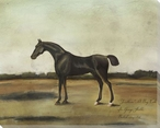 Trentham a Bay Colt Horse Wrapped Canvas Giclee Print Wall Art