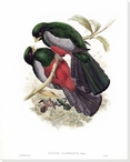 Trogan Clathratus Two Birds Wrapped Canvas Giclee Print Wall Art