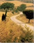 Tuscan Way Wrapped Canvas Giclee Print Wall Art