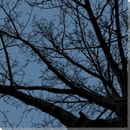 Twilight Trees Blue Left Wrapped Canvas Giclee Print Wall Art