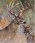 Two Deer Wrapped Canvas Giclee Print Wall Art