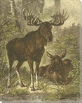 Two Moose Wrapped Canvas Giclee Print Wall Art