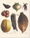 Vegetable Album No.12 Wrapped Canvas Giclee Print Wall Art