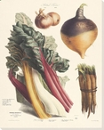 Vegetable Album No.13 Wrapped Canvas Giclee Print Wall Art