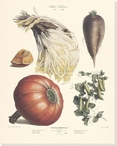 Vegetable Album No.17 Wrapped Canvas Giclee Print Wall Art