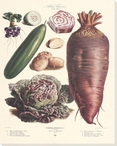 Vegetable Album No.33 Wrapped Canvas Giclee Print Wall Art