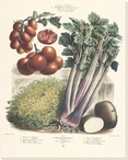Vegetable Album No.37 Wrapped Canvas Giclee Print Wall Art