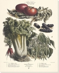 Vegetable Album No.43 Wrapped Canvas Giclee Print Wall Art
