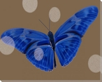 Vibrant Blue Butterfly Study Wrapped Canvas Giclee Print Wall Art