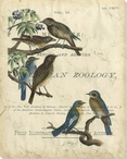 Vintage Birds I Wrapped Canvas Giclee Print Wall Art
