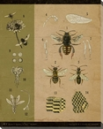 Vintage Educational Chart Bees Wrapped Canvas Giclee Print Wall Art