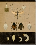 Vintage Educational Chart Insect Wrapped Canvas Giclee Print Wall Art