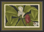 Vintage Flora III Matted and Framed Art Print Wall Art
