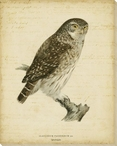 Vintage Owl Bird Wrapped Canvas Giclee Print Wall Art