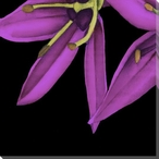 Violet Graphic Lily Flower BL Wrapped Canvas Giclee Print Wall Art