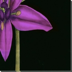 Violet Graphic Lily Flower BR Wrapped Canvas Giclee Print Wall Art