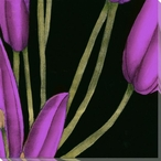 Violet Graphic Lily Flower MR Wrapped Canvas Giclee Print Wall Art