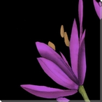 Violet Graphic Lily Flower TL Wrapped Canvas Giclee Print Wall Art