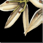 White Graphic Lily Flower BL Wrapped Canvas Giclee Print Wall Art