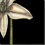 White Graphic Lily Flower BR Wrapped Canvas Giclee Print Wall Art