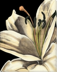 White Graphic Lily Flower IV Wrapped Canvas Giclee Print Wall Art