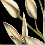 White Graphic Lily Flower ML Wrapped Canvas Giclee Print Wall Art